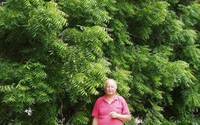 Neem Trees in Australia